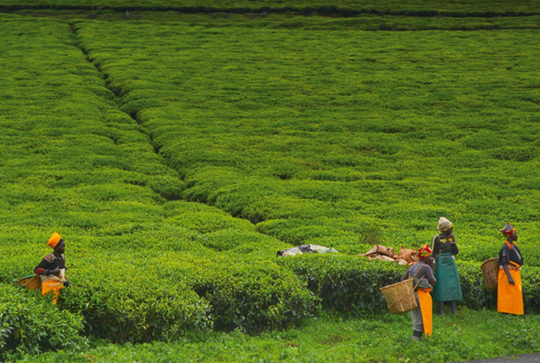 Bodenkultur in Ruanda